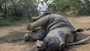 Texas hunters pledge to save endangered black rhinos by killing one